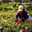 Josephine's Roses Gündüz Bakım Kremi 50 ml. ürün görseli