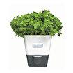 Cole & Mason H105249 Yeşillik Saklama Kabı. ürün görseli