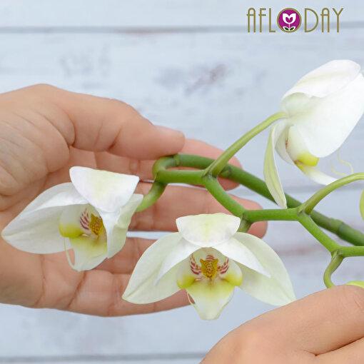 Afloday Orkide Bakım Tüyoları Offline & Online Atölye Workshop Hizmeti. ürün görseli